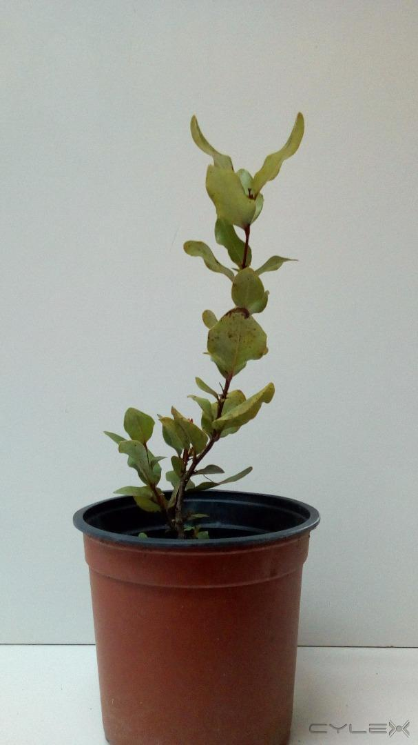 Viveros comalle teno parcela n 76 56977574 for Vivero plantas nativas